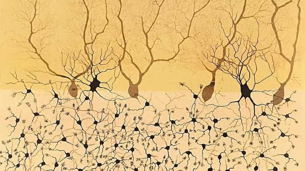 Neurones marrons